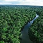 Amazônia (Foto: Reprodução Internet)