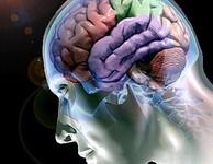 cérebro e sexo