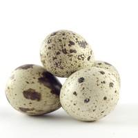 Ovos de codorna têm mais calorias que os de galinha (Foto: SXC.hu)