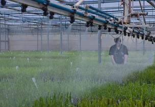 As mudas produzidas na biofábrica são multiplicadas em viveiros (Foto: Divulgação / Syngenta )