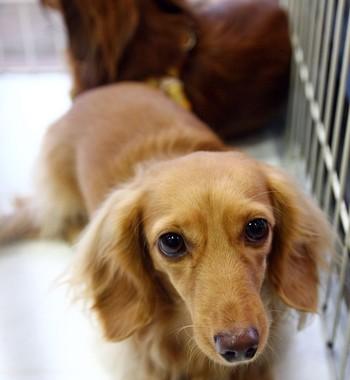 Cachorro (Foto: Getty Images)