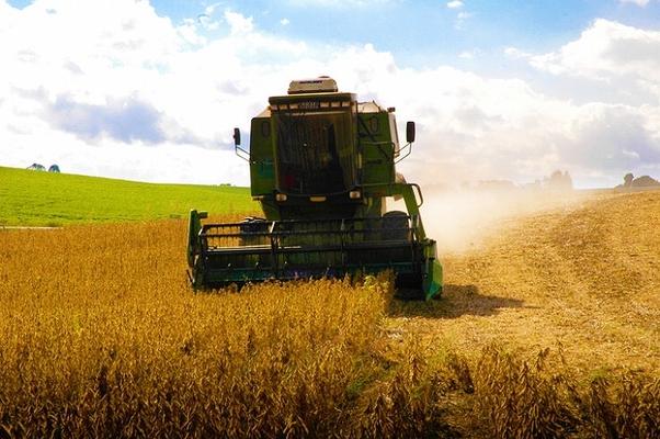 Colheita de grãos: safra agrícola caiu, mas mostrou melhor resultado do que o previsto (Foto: Getty Images)