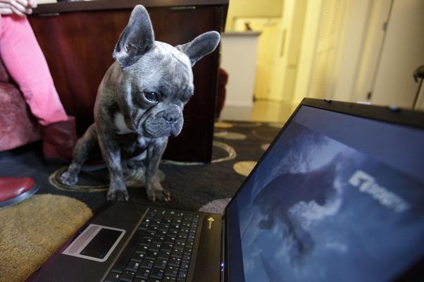 Bleu é um dos telespectadores assíduos do DogTV (Foto: AP Photo/Gregory Bull)