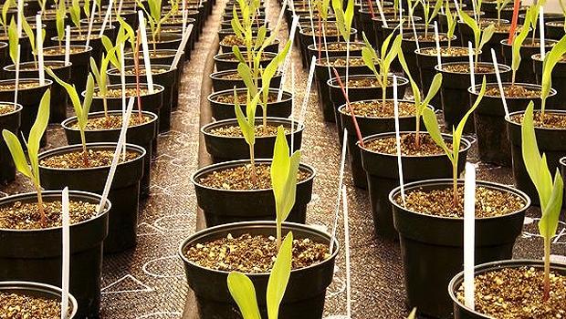 Plantação da Monsanto (Foto: Bloomberg/Getty Images)