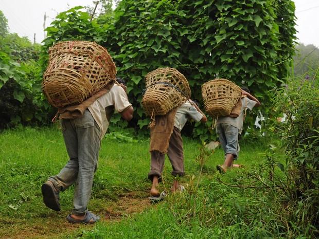 Trabalho escravo (Foto: Shutterstock)