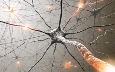 Modelo mostra impulso nervoso no cérebro (Foto: ShutterStock)