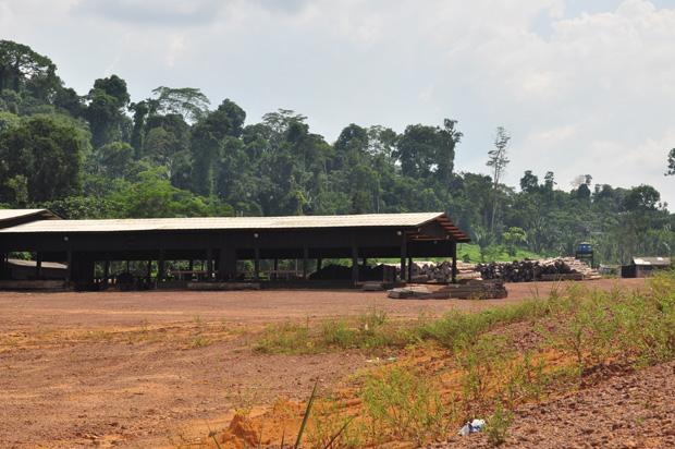 Floresta morta: na serraria do assentamento, já passou muita madeira ilegal (Foto: Reprodução)