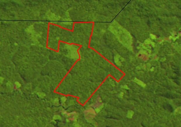 A prova da fraude: a imagem de 2009 mostra que houve pouca ou nenhuma extração de madeira na área autorizada do PA Areia (Foto: Reprodução)