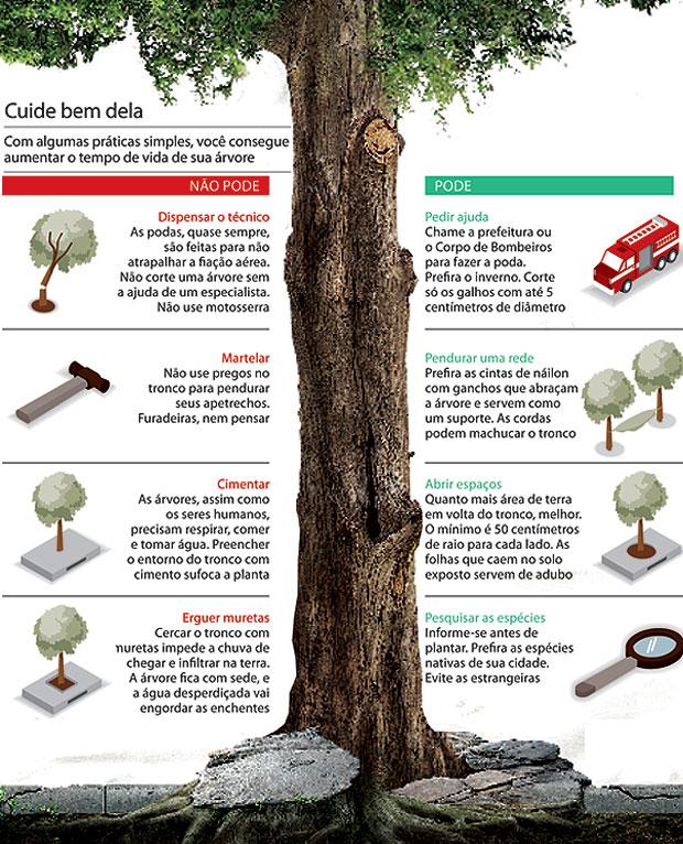 Árvores (Foto: Infográfico: Gerson Mora e Rodrigo Fortes)