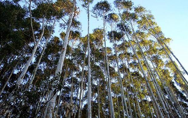 Com Código Florestal, as propriedades rurais que têm rios com até 10 metros de largura terão de recuperar as áreas desmatadas auma faixa de 15 metros a cada margem (Foto: Shutterstock)