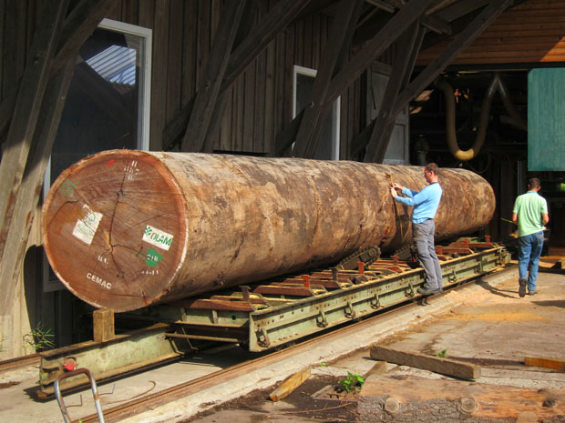woodring (Foto: divulgação)