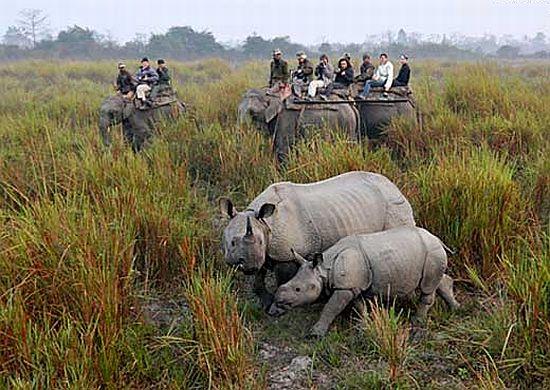 Caça de animais selvagens por ricaços chineses (Foto: Reprodução Internet)