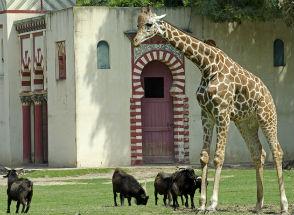 Em Buenos Aires, animais selvagens vivem em palácios e templos
