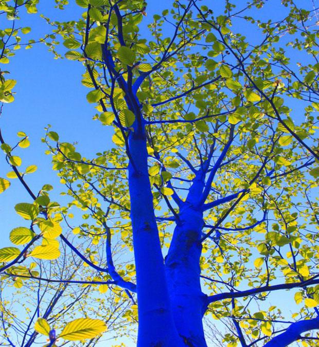 arvore_azul_arte (Foto: divulgação)