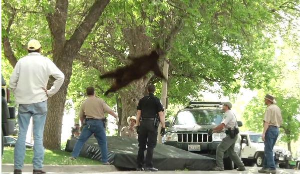 urso (Foto: Reprodução)