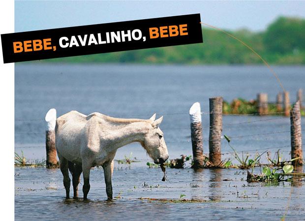 """Dilma bateu nos bancos e a Febraban revidou: """"Você pode  levar o cavalo [os bancos] até a beira do rio, mas não conseguirá obrigá-lo a beber  a água [baixar  os juros]""""  (Foto: Leonardo Wen/Folhapress)"""