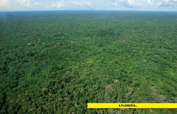 Esta é a Amazônia, como o mundo a imagina (e quer manter): o maior biossantuário da humanidade, onde a cobertura vegetal avança em todas  as direções até tocar o horizonte (Foto: Fernando Martinho)