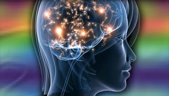 Cérebro (Foto: Concordia University)