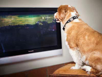 DogTV (Foto: divulgação)