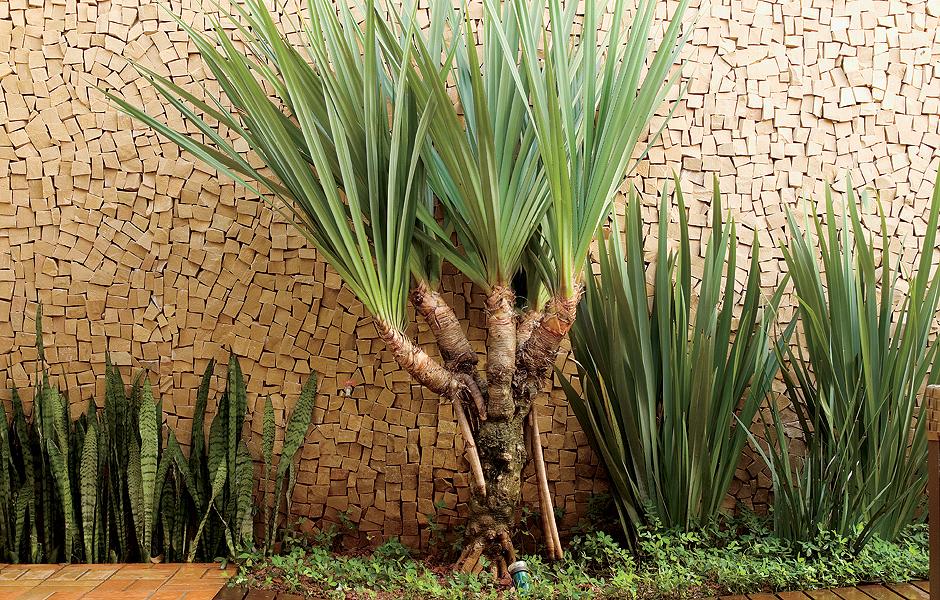Espada de s o jorge casa e jardim plantas for Plantas para estanques pequenos